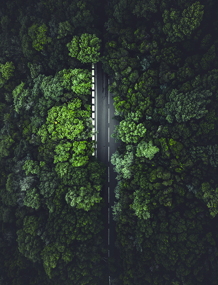 A road in the forest, seen from above