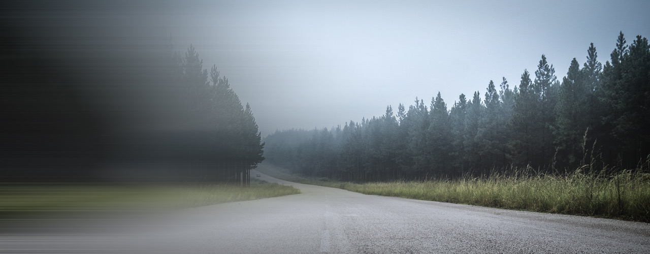 A road in a forest